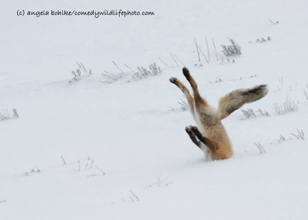 Конкурс Comedy Wildlife Photography Awards 2016 и его фотошедевры